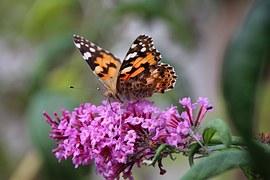 Vrij als een vlinder, vrijheid