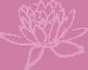 rose lotus transperant klein